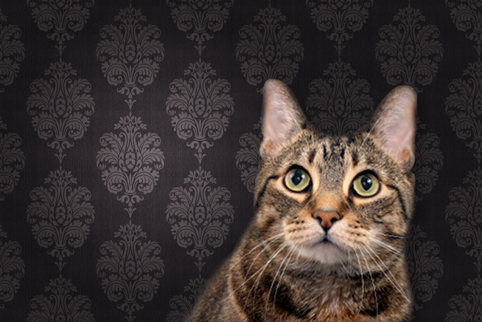 Cat looking up in front of wallpaper
