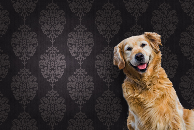 Happy dog in front of wallpaper