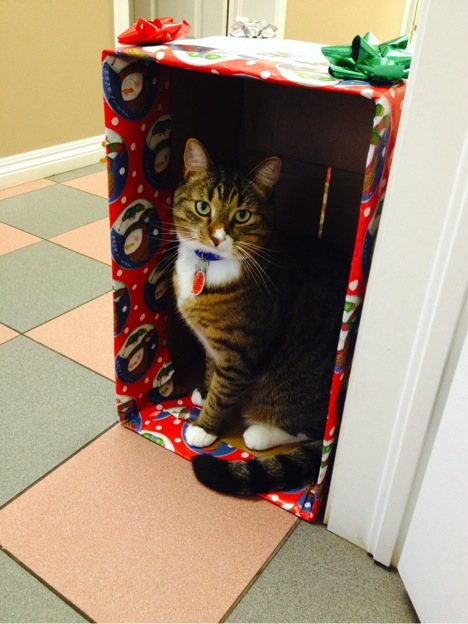 Nigel the cat in a Christmas gift box