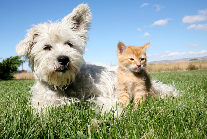 Dog and cat lying on grass