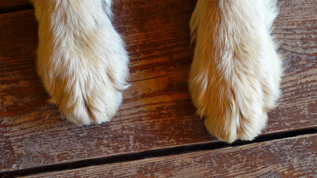 Paws on wooden floor