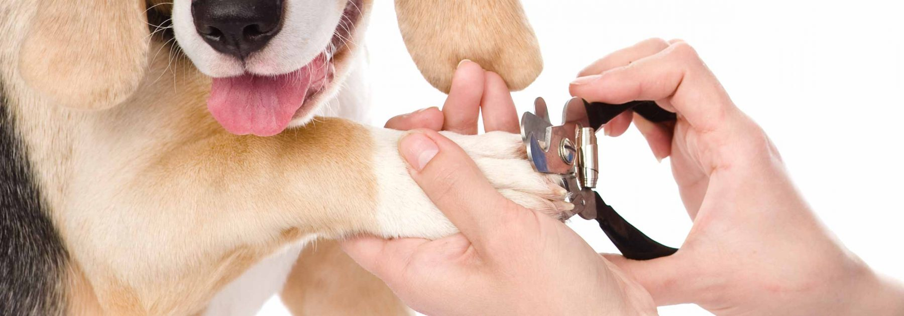 Dog getting its nails trimmed