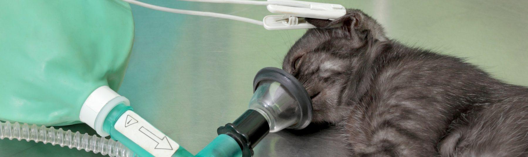 cat-surgery-services