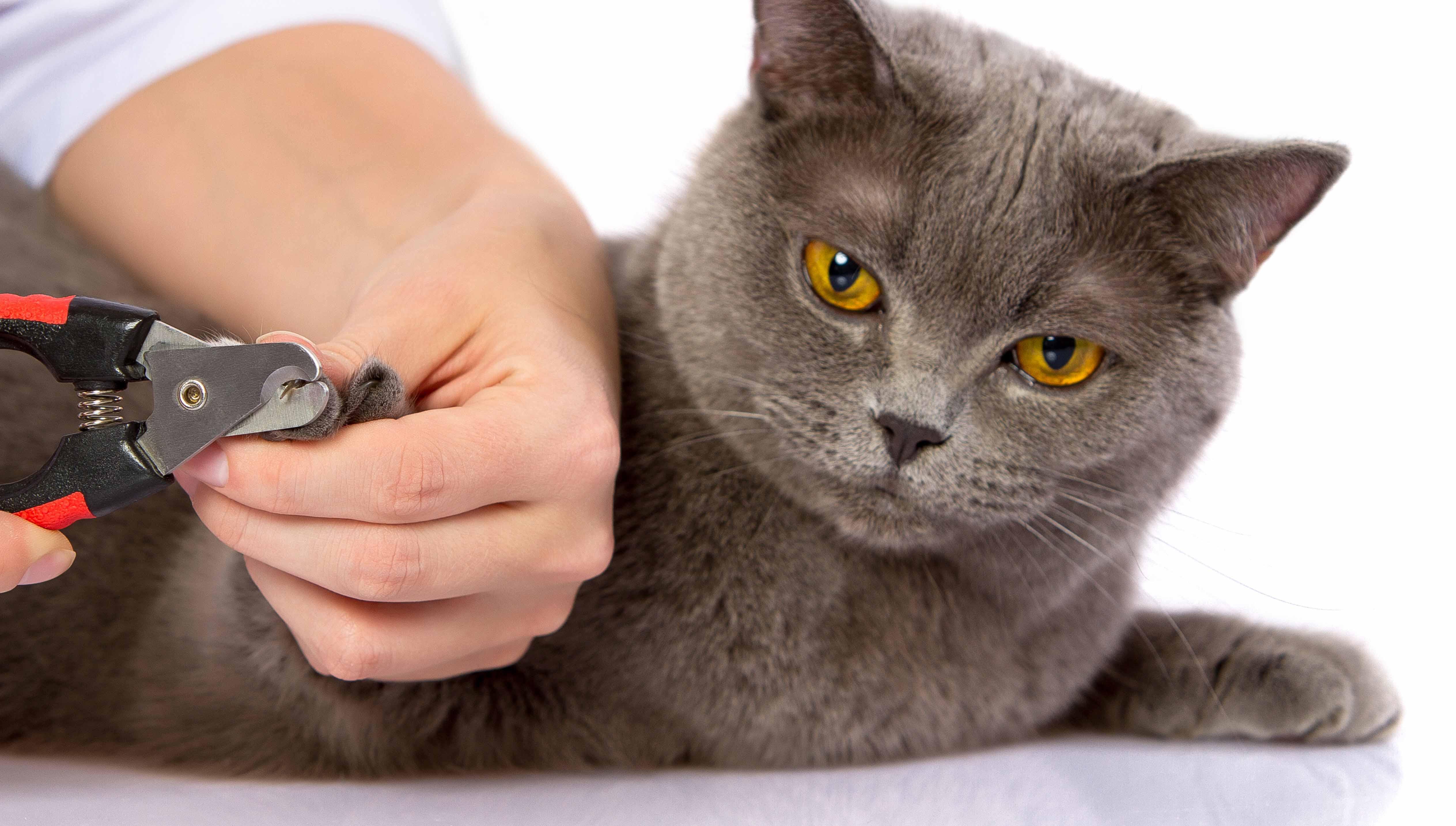 Кошка дерет мебель? Отучить кошку царапать мебель просто 42