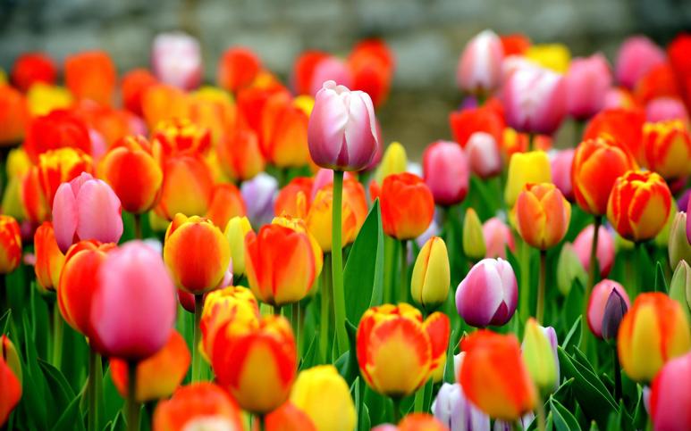 toxic-flowers