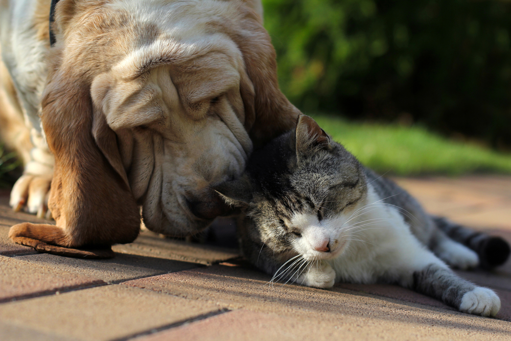 dog and cat bonding with eachother