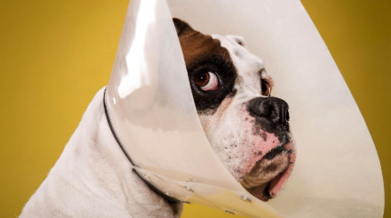 Benefits of Spaying/Neutering Your Pet