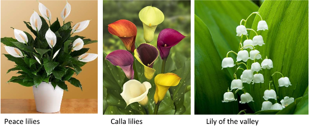 Three different types of Lilies