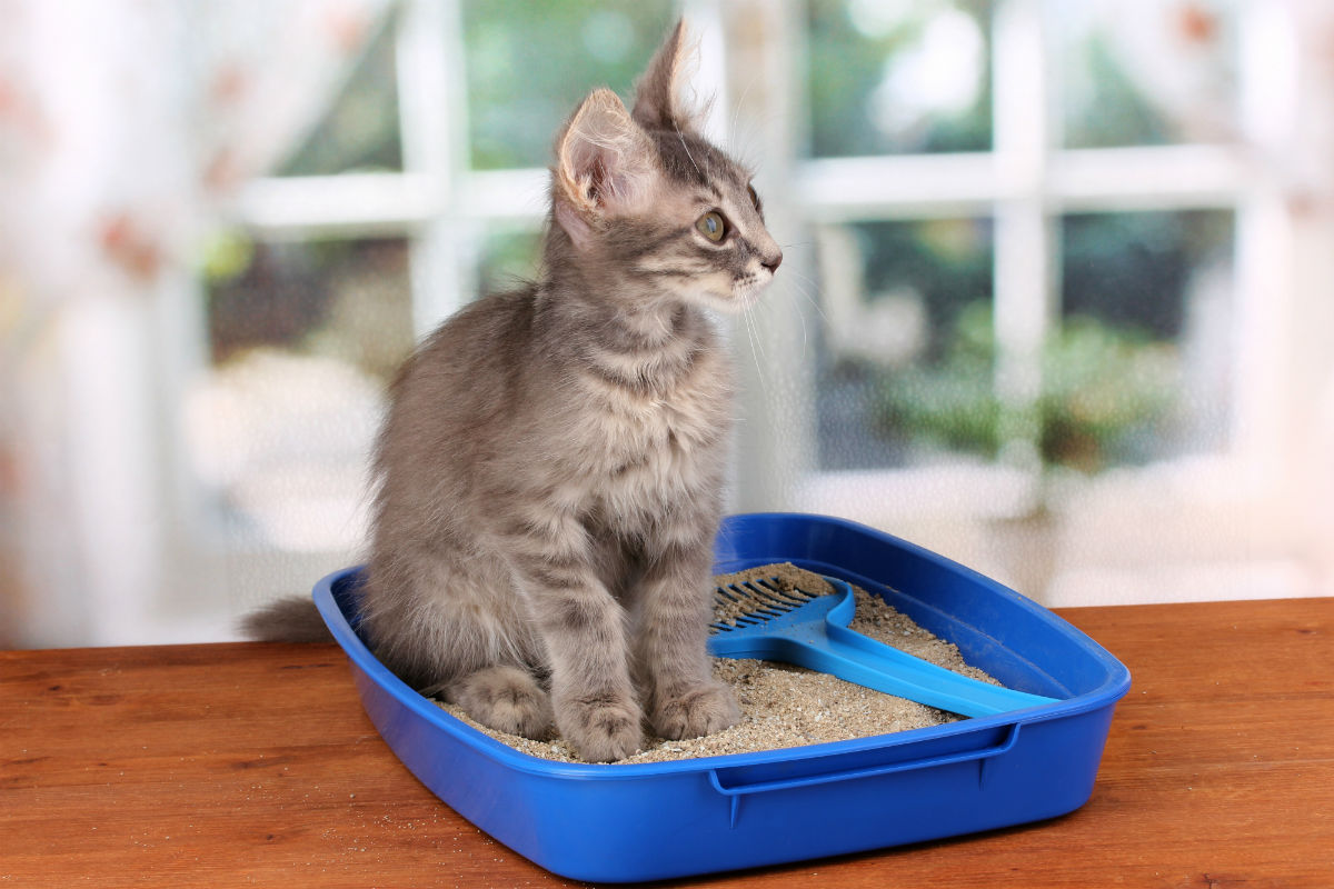 Litter Box Tips Tricks Vetcare Pet Hospital