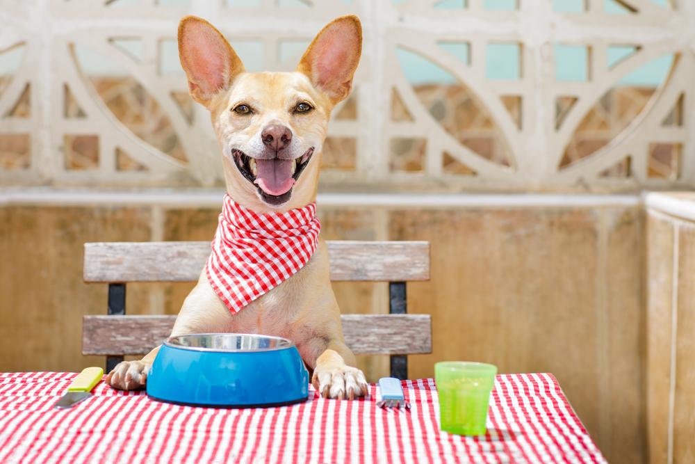 Happy dog wearing a bandana and sitting at a picnic table