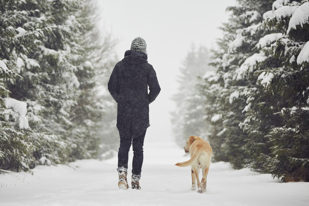 Back view of a person and dog walking on a snowy path