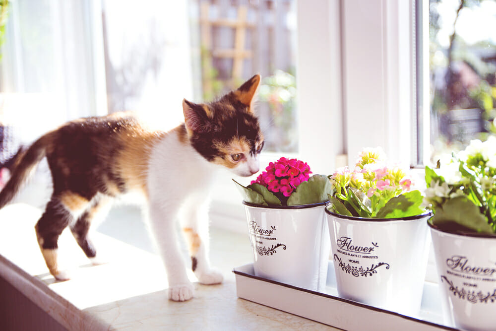 Cat sniffing a pot of flowers